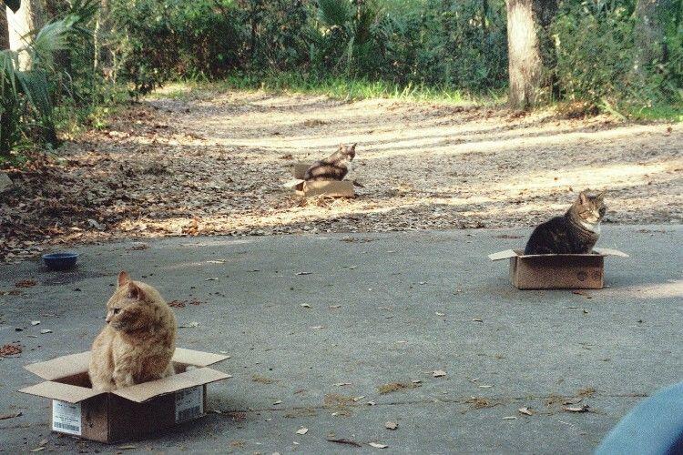 cat traps - pichars.org