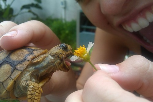 turtle ates flower