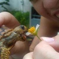 turtle ates flower