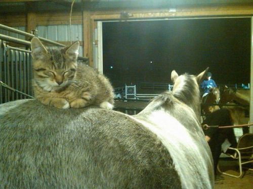 cat sleeping on horse - pichars.org