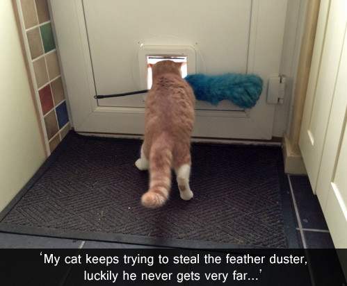 cat stealing feather duster