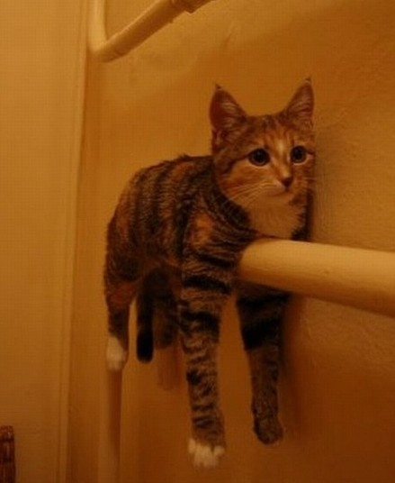 cat monorail