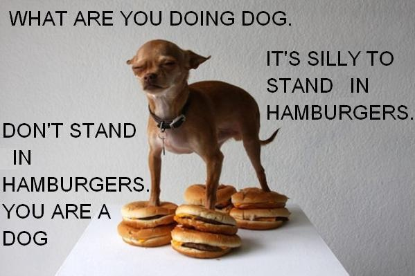 you are a dog