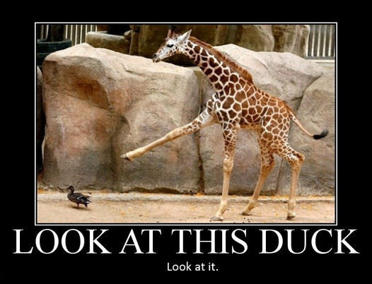 look at this duck
