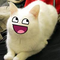 :D cat