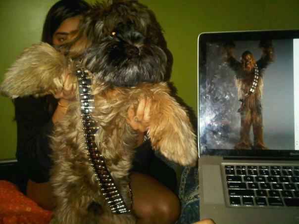 dog the wookie - pichars.org