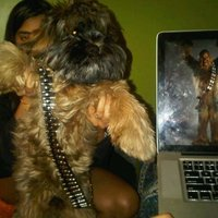 dog the wookie