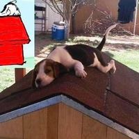 snoopy is real
