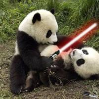 panda sabre fight