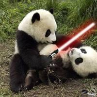 panda sabre fight