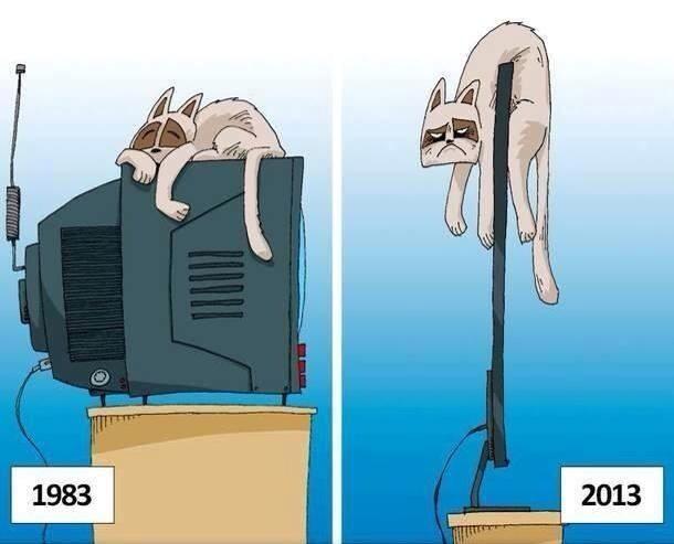 poor cats