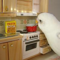 cooking bird