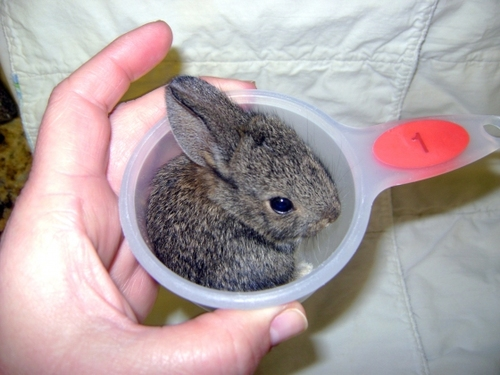 one cup of bunny - pichars.org