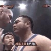 kiss knockout