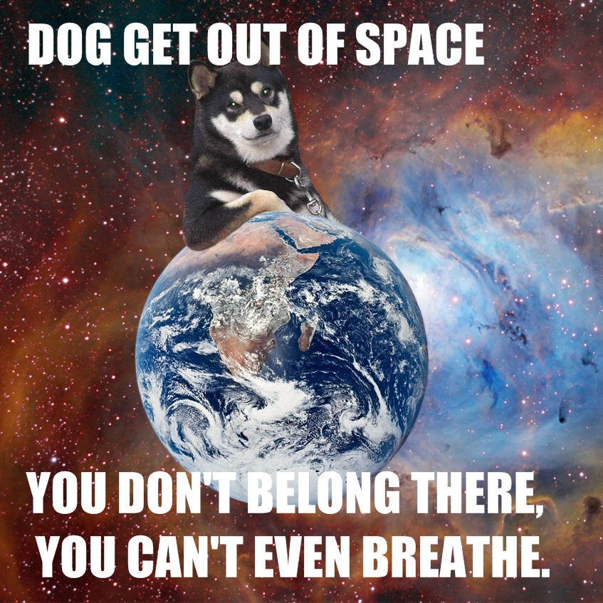 dog get out of space