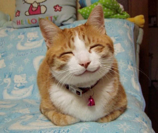 smiling cat - pichars.org