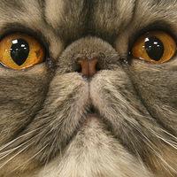 cat face big