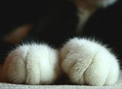 paws - pichars.org
