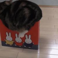 cat in box failure