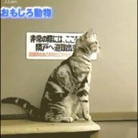 cat stands