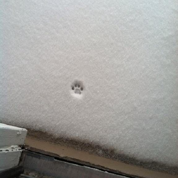the littlest nope