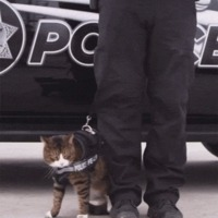 why there are no police cats