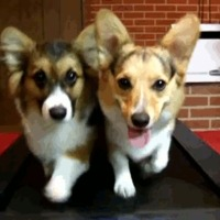 treadmill puppies
