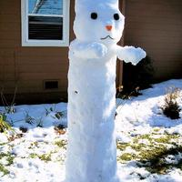 snow longcat