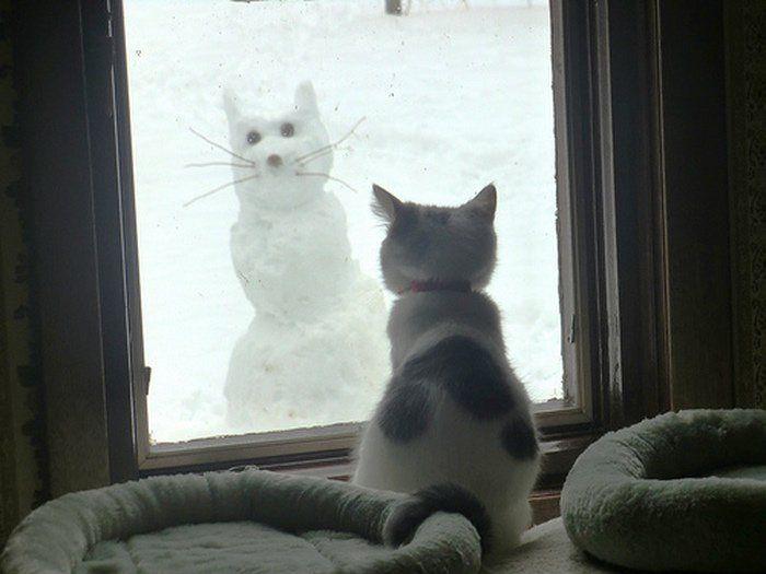 cat enjoys snow cat - pichars.org