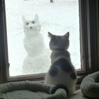 cat enjoys snow cat