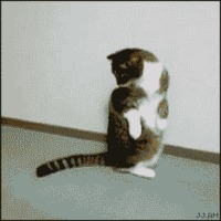 cat attacks tail