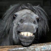 goofy horse