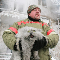 angry cold cat