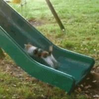 cat tries hard