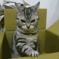 cat regulates box