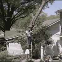 unsafe tree cutting