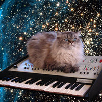 space cat synth