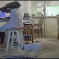 Dog win!