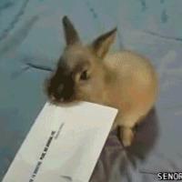bunny letter opener