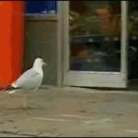 seagull thief