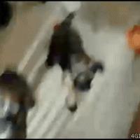 puppies gtfo