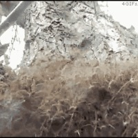 tree spiders