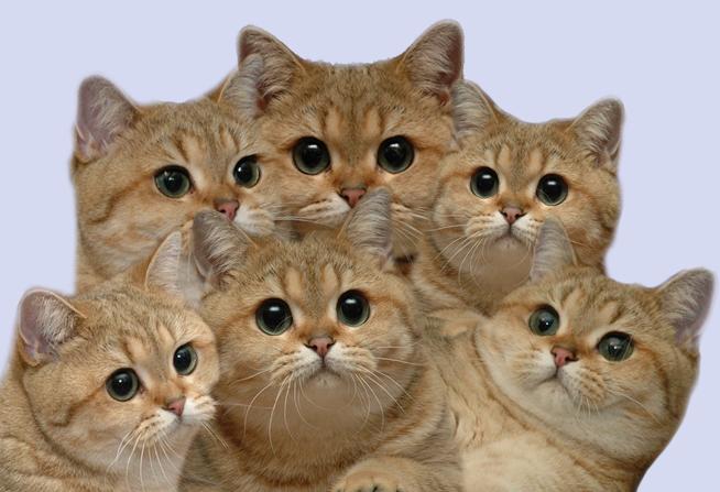CATS. - pichars.org