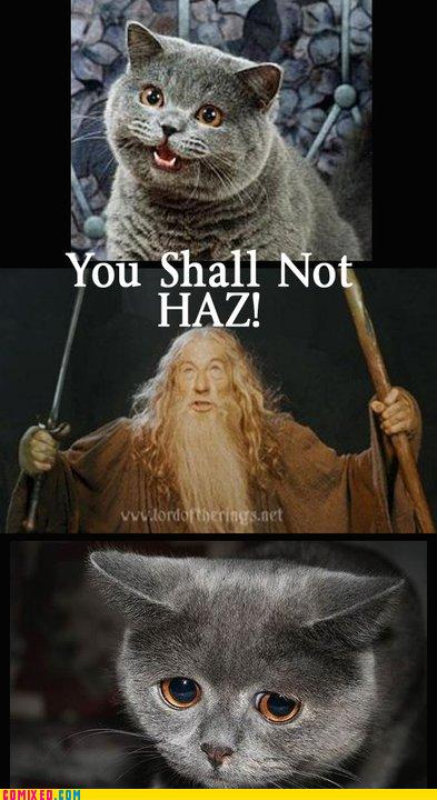 you shall not haz