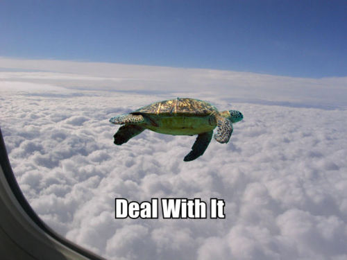 turtle deal with it