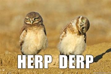 herp derp owls
