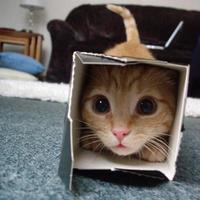 cat finds perfect box