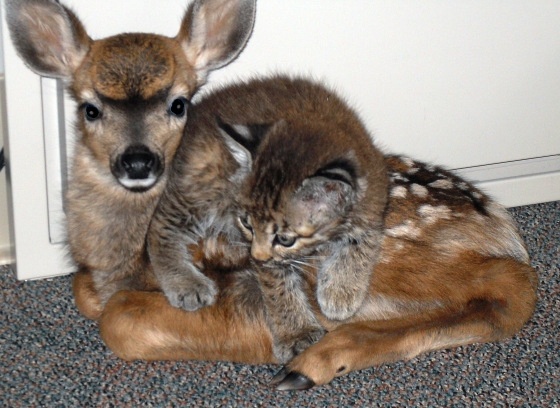 cat and deer - pichars.org