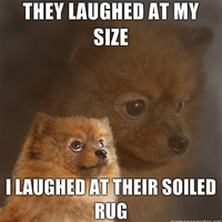 they laughed at my size.. dog