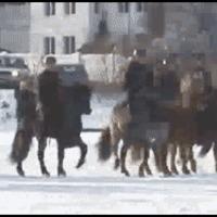 horses too heavy for ice